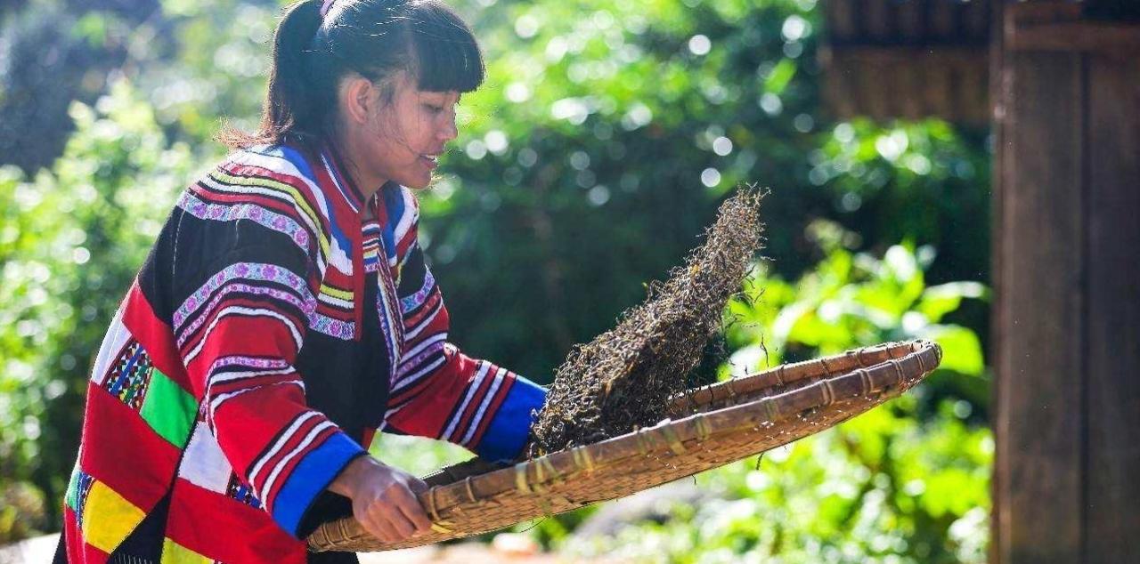 プーアル茶を仕上げる雲南省の女性