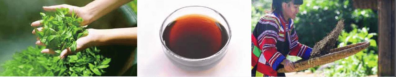 長期の発酵期間が脂肪分解力の秘密 「ぷうあるちゃ」は製造工程が緑茶や紅茶・ウーロン茶などとは異なり、黒麹菌を加え時間をかけて醗酵させるので、お茶の中でも唯一「飲む発酵食品」と言われています。 長期間醗酵の間に重合カテキン(脂肪分解酵素)が作られます、その重合カテキンにこそ、脂肪が体内に吸収されるのを防ぐ働きがあるのです。 脂肪が気になるすべての方に毎日の健康習慣として、是非お勧めのお茶が「ぷうあるちゃ」です。 「ぷうあるちゃ」の生育に最適な土と気候とその力 「ぷうあるちゃ」の原産地は、中国南部の雲南省で年中暖かく 青々とした木々が一年中生い茂る生命力にあふれたところです。 また「ぷうあるちゃ」の茶畑の真赤な土には、自然のミネラルやカルシウムなどの栄養成分も豊富に含んでいます。 そして何より注目なのが、脂肪分解パワーに優れていること。事実、雲南省は油の多い料理を食べる土地柄にもかかわらず、ほっそりとした人が多いことでも知られています。